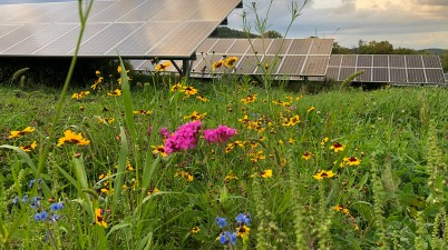 solar farm pollinator habitat