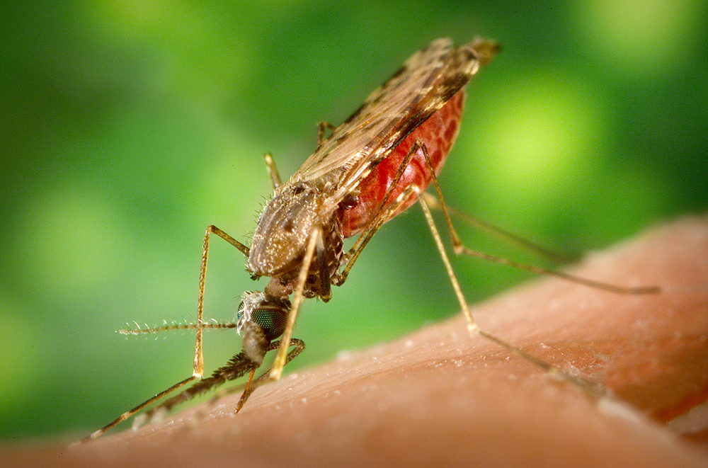 Inducing Mosquitoes to Lay Eggs Aids in Insecticide Resistance Testing