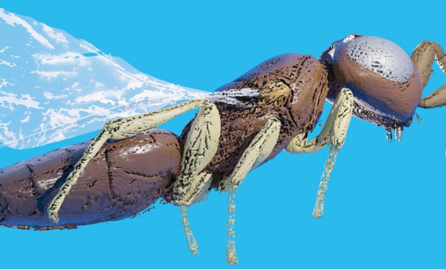 3D model of parasitoid wasp