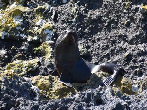 pohatu penguins_51