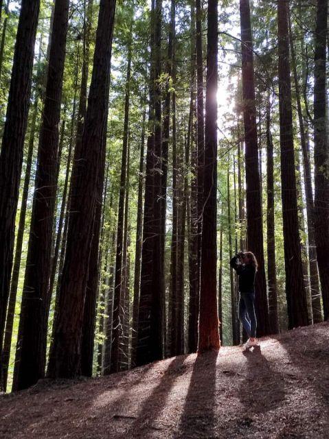 Bosque de Sequoyas de Cabezón de la Sal, en Cantabria.