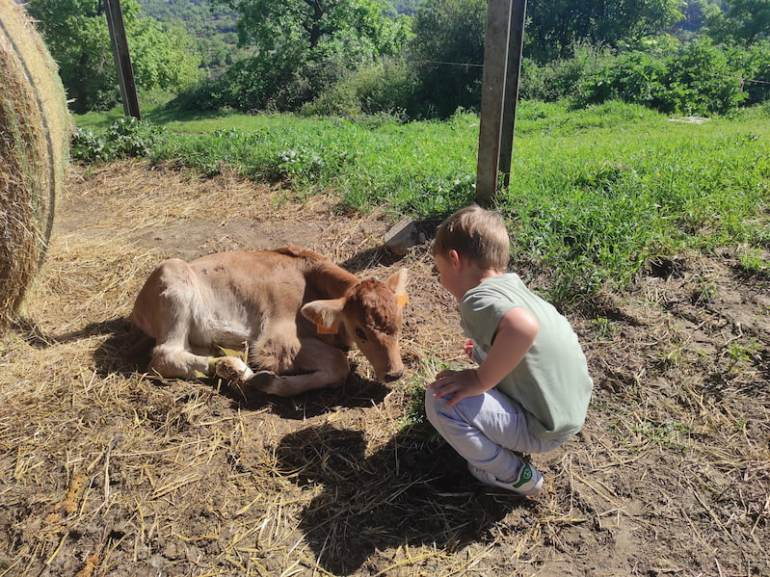 Granja de vacas cerca del mirador del Ter