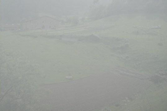 valle neblina color