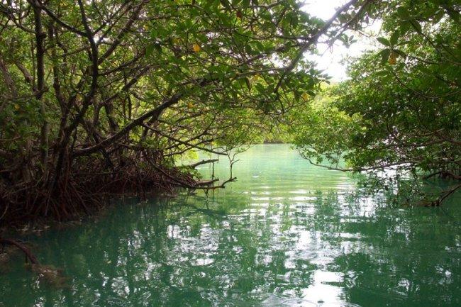 Reserva Biosfera Los Petenes, Campeche