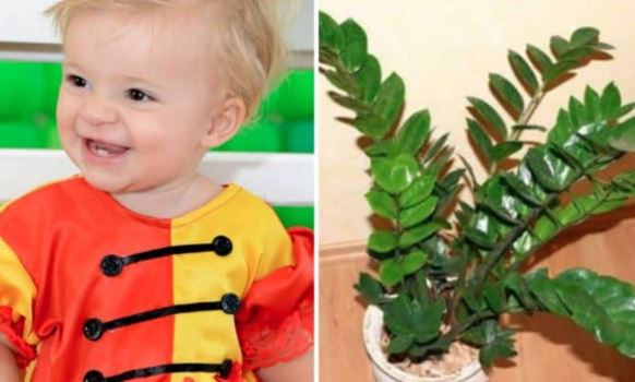 Alerta: Bebê Coloca Planta Na Boca, E Em Minutos Quase Perde A Vida