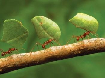 Formigas!