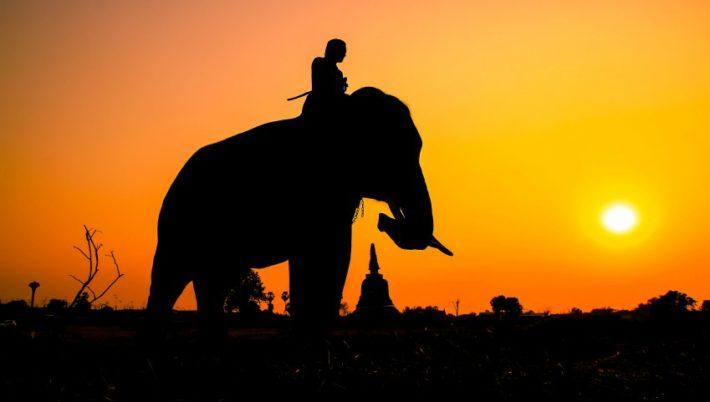 Hablar al elefante