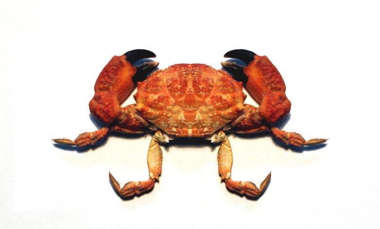 Photo of A lenda do caranguejo