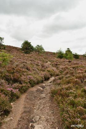 Millestone_Hill_trail_03