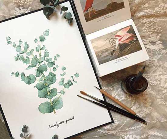 畫桌上的植物學-自然控的觀察手繪圖鑑課