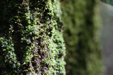 I got kinda into the moss photos