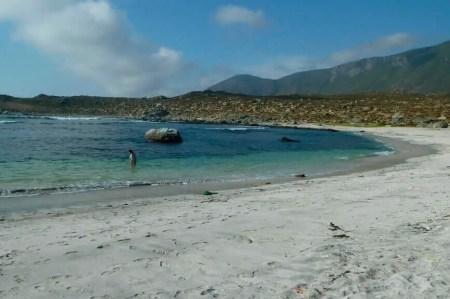 Mejores playas de Chile Totoralillo