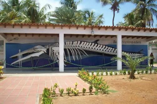Sitios turisticos de Margarita Museo Marino