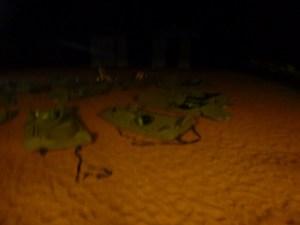 lit-desert-nt