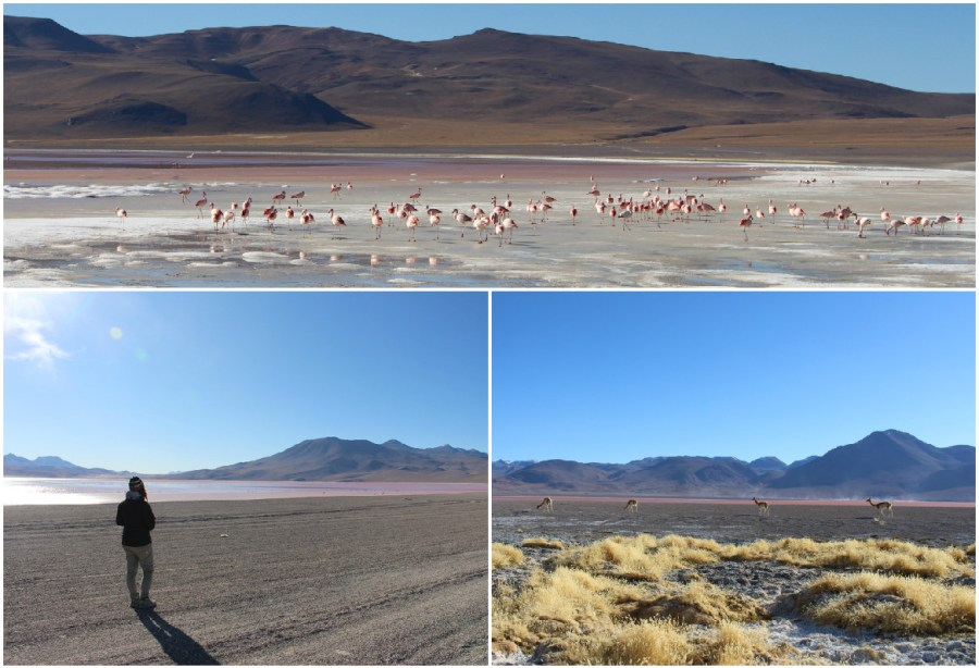 laguna-colorada-flamants-roses-tour