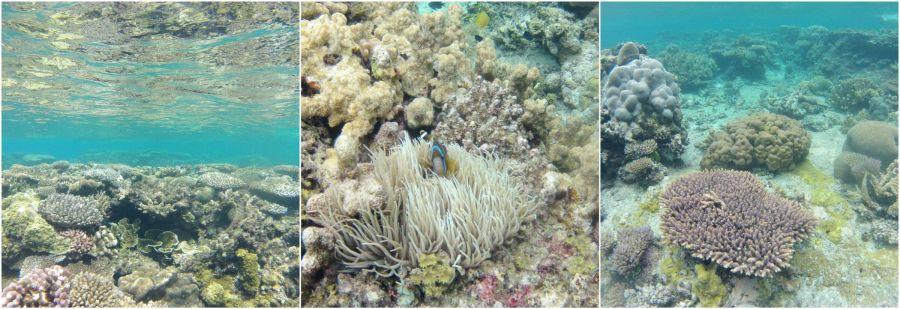 lifou-fonds-marins-nouvelle-caledonie