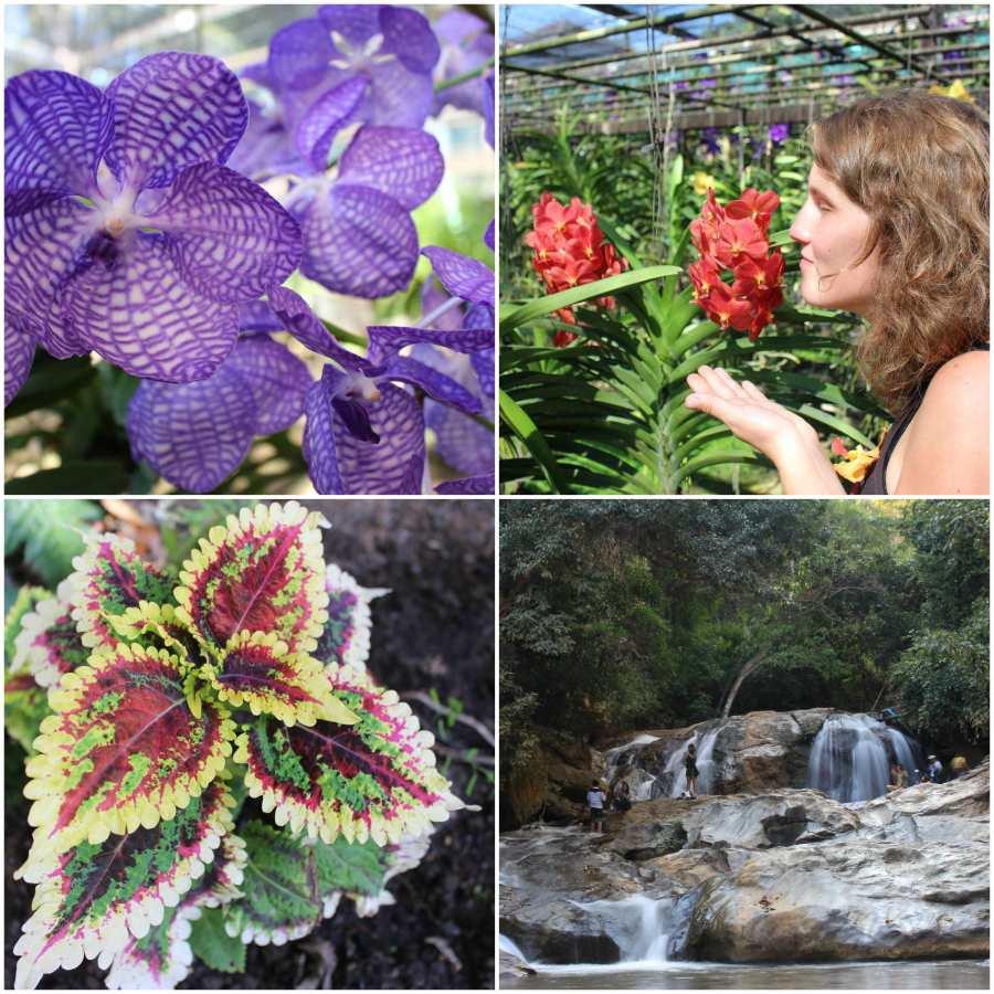 orchidee-cascade-chiang-mai