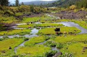 Les paysages verts de cette région fertile.