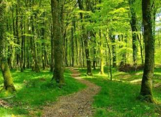 chemin-forestier