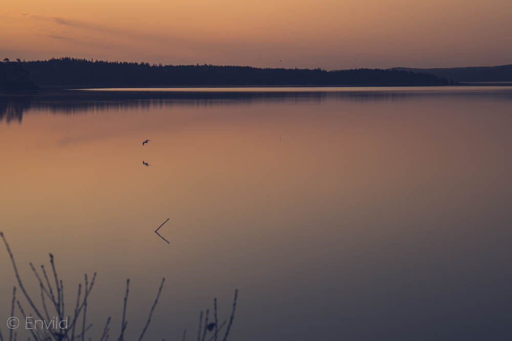 Soluppgång kl 05 i maj månad vid sjön Mjörn, Lerums Kommun. Foto Johanna Ene 2021.