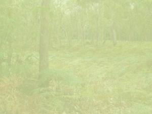 EnviroPrint Australia Bush