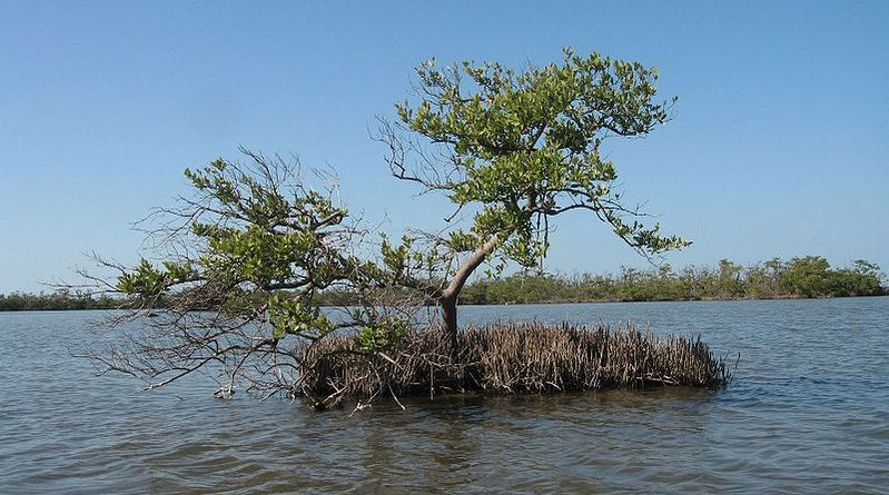 Mangroves Marching North: How do black mangroves and saltmarshes interact?