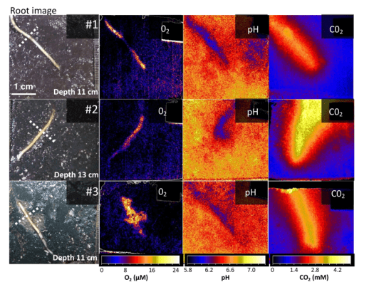 Oxygen, pH, and carbon dioxide measurements using optode imagery