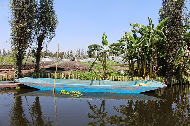 Traditional trajinera next to a typical chinampa in Xochimilco wetlands.
