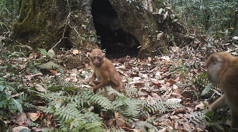 A monkey on the ground in a forest