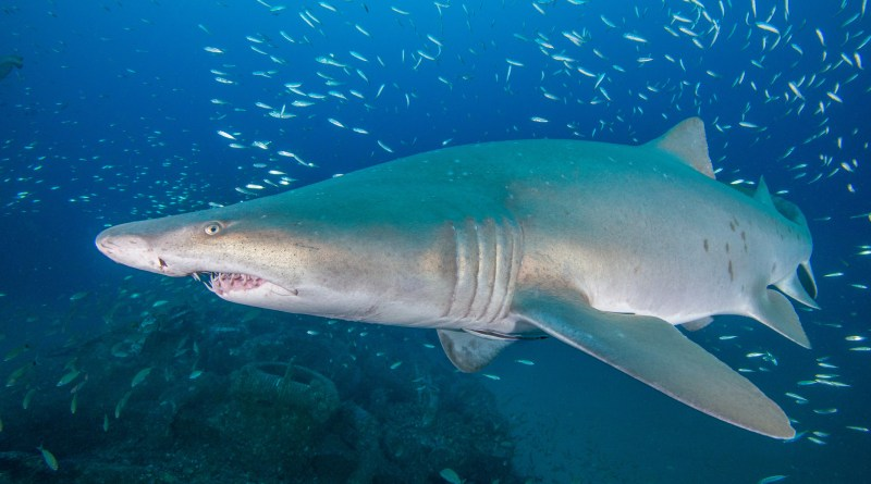 Crowdsourcing Sharks: a citizen science success story