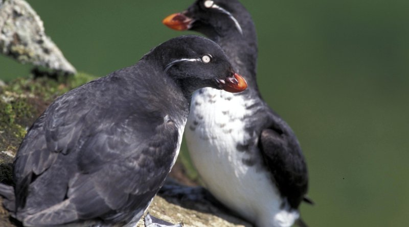 It matters where you eat: seabird foraging strategies alter their responses to climate change