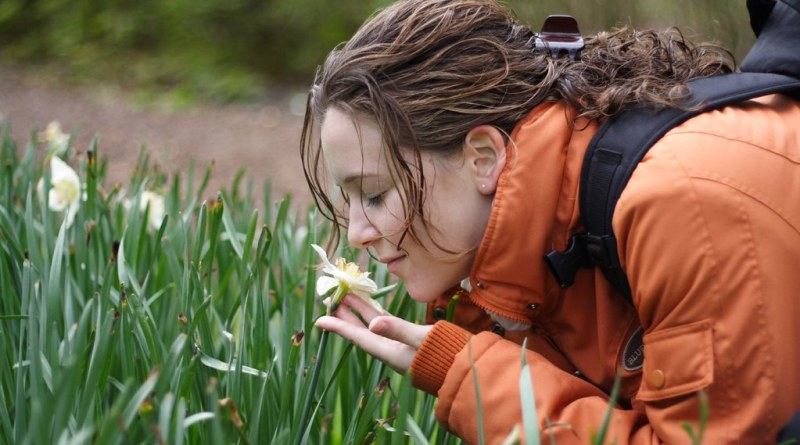 Follow your nose: the importance of odor for stress relief in urban green spaces