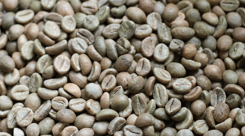 Uncool beans: The future of coffee under climate change