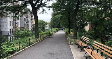 Paved path in a city surrounded by green lawn, trees, and a row of park benches