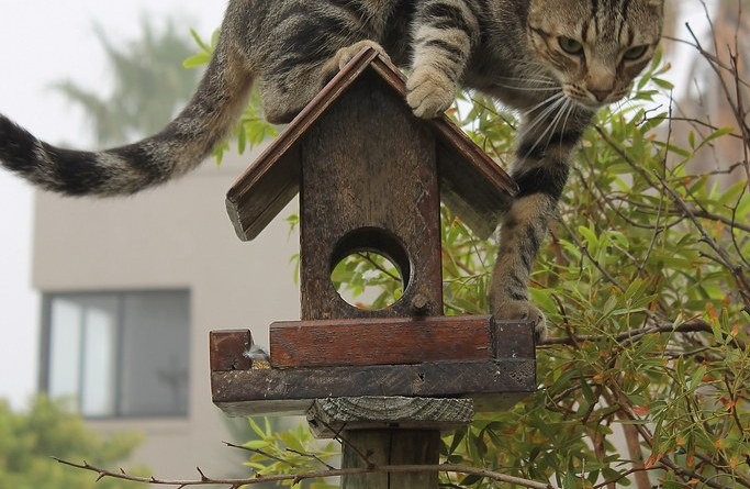 Cat-agorizing Cat Owners to Reduce Environmental Harm caused by Domestic House Cats