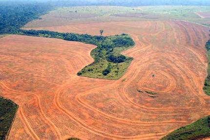 In the greater mekong in southeast asia, where land tenure. Harmful Effects Of Deforestation