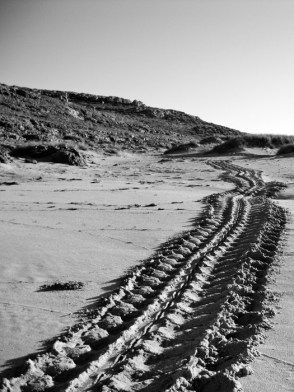 Turtle Tracks, Barrow Island