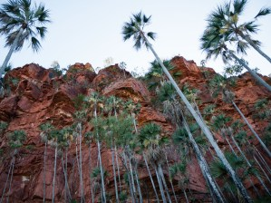 Palm trees on the Nawulbinbin Walk, Gregory National Park, Northern Territory