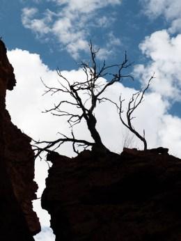 Temple Gorge, Kennedy Ranges National Park, Western Australia
