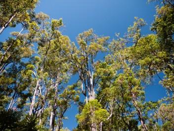 Sika Circuit Walk, Wellington National Park