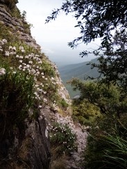 Shaded Walk Trail Peppered with Wildflowers enroute to Toolbrunup Peak, Stirling Range National Park
