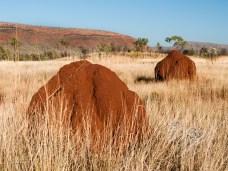 Termite Mounds, Mornington Sanctuary, Kimberleys, Western Australia
