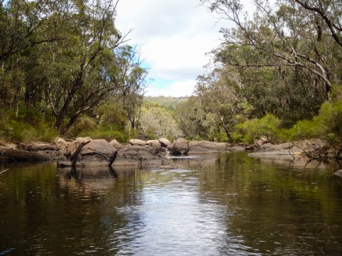 Murray River, Lane Poole Reserve