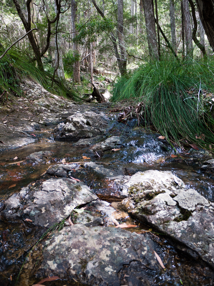Meandering Stream along the Minyon Loop Walking Track, Nightcap National Park