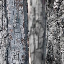 Textures of bark, Mount Cooke, Monadnocks Conservation Park