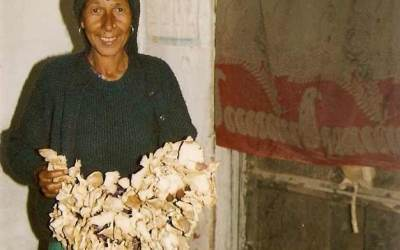Mushroom Cultivation in Kalsi