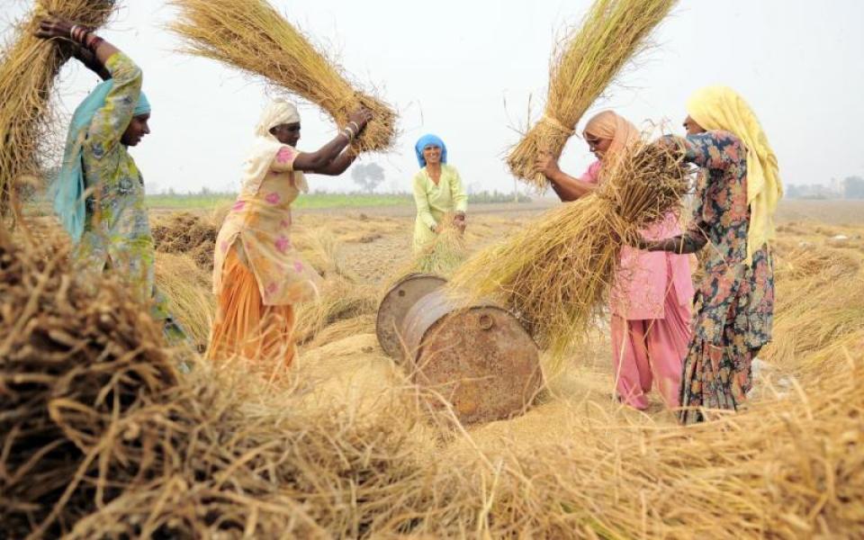 Female farmers in India feed their families despite devastating ...