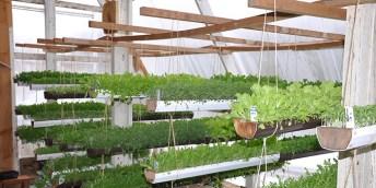 Photo: Interior Deep Winter Greenhouse