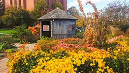 Beautiful garden in fall with circular shed in background