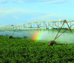 irrigating a large field